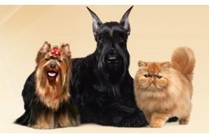 Тонкости стрижки собак разных пород